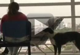 Vídeo mostra história do cão que não deixava hospital onde dono faleceu