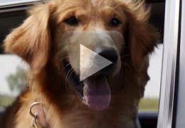 Mais um filme para quem gosta de cachorros