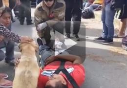 Cachorro se desespera ao ver dono acidentado