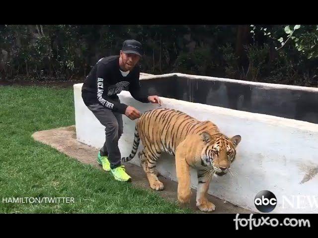Hamilton se diverte com tigresa Nicole