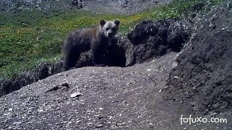 Urso raro aparece em gravação
