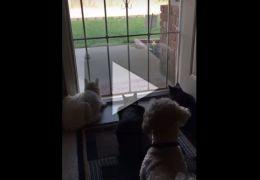 Cachorro assusta gatos concentrados