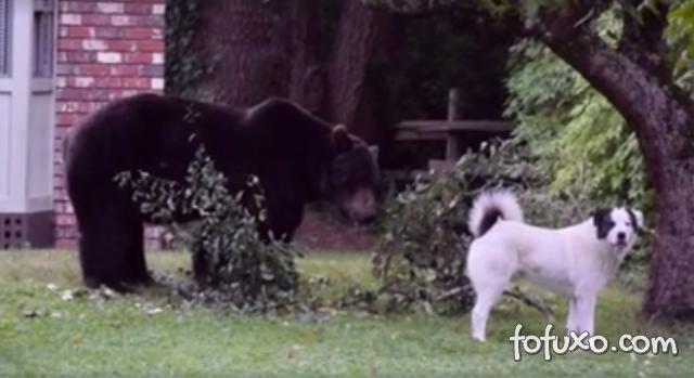 Cachorro enfrenta urso gigante