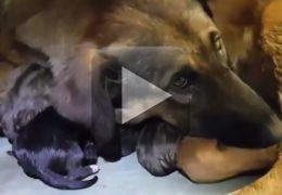 Cadela dá à luz dentro de vagão de metrô