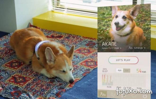 Coleira revela emoções dos cachorros