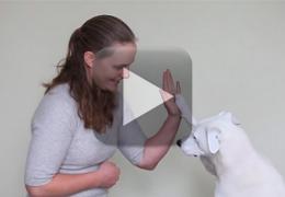 Cachorro surdo aprende língua de sinais