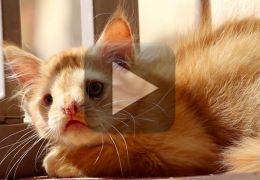 Conheça a história do gato Romeo