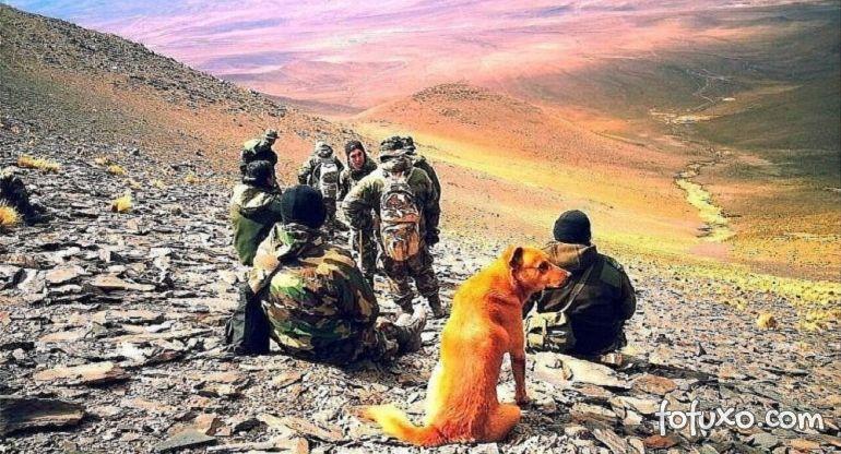 Exército argentino tem cachorro com posto de sargento