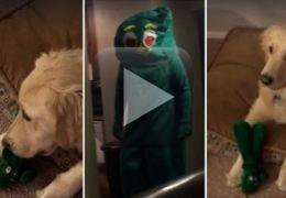 Cadela fica louca ao ver dono fantasiado de seu brinquedo predileto