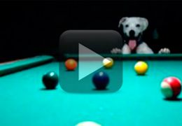 Cachorro se diverte jogando bilhar