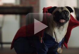 Vídeos transforma cachorros em heróis da Marvel