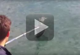 Vídeo mostra gato sendo resgatado em alto mar