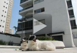 Donos de cachorros devem tomar cuidado dentro de condomínios