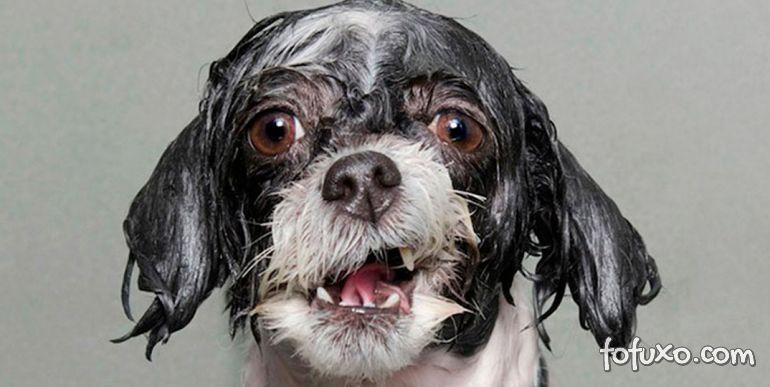Entenda a excitação dos cães após o banho