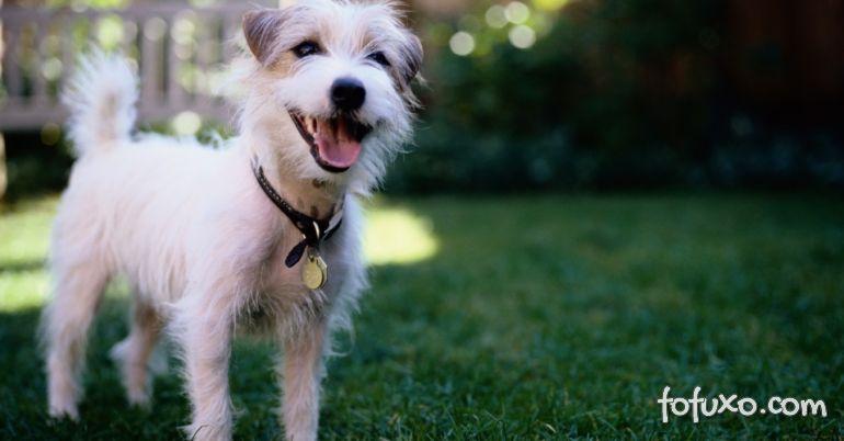 Novas pesquisas afirmam: cães lembram mais do que pensávamos!