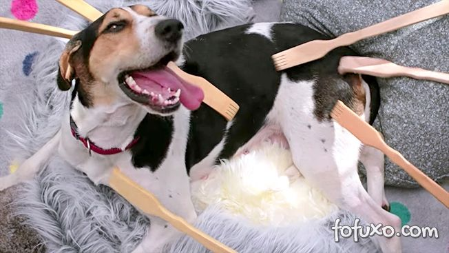 Canon faz propaganda com melhor dia da vida de cão