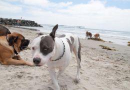 Conheça a praia perfeita para os cães