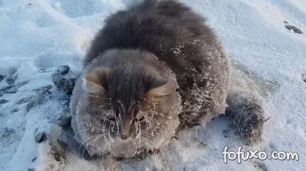 Gato é resgatado depois de sofrer congelamento na rua