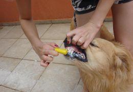 Dicas e cuidados com os dentes caninos
