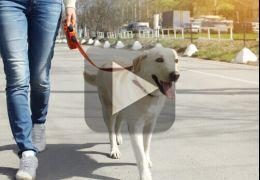 Cachorro ajuda dono a andar de skate