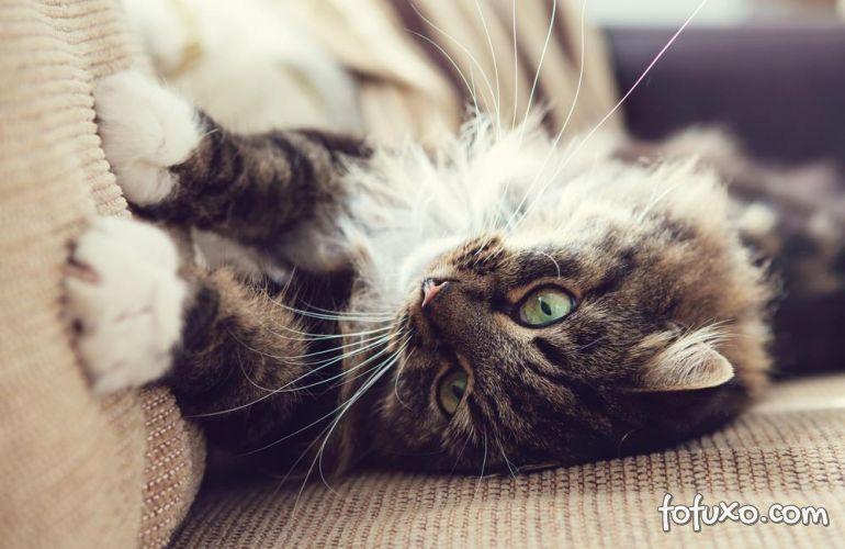 Dicas para evitar que os gatos arranhem os móveis