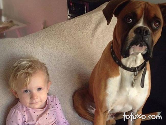 Cachorro defende menina de 2 anos e acaba sendo picado por uma cobra