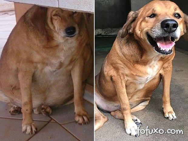 """Cachorro """"Bolinha"""" volta a ficar obeso depois de tratamento"""