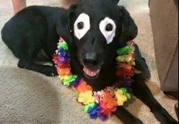Cachorro com manchas nos olhos faz sucesso na internet