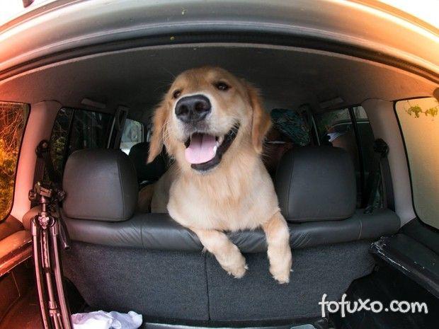 Cachorro derruba pedestre e viraliza na web