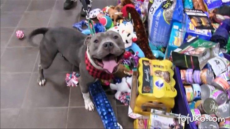Vídeo mostra cães e gatos de abrigo abrindo presentes de natal