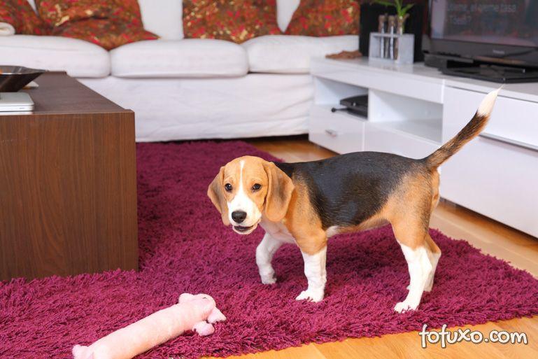 Dicas e cuidados para criar pets em apartamentos pequenos