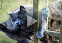 Homem vibra com presente de natal e acaba sendo atacado por um gato