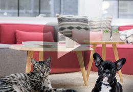 Vídeo mostra gato acordando cachorro