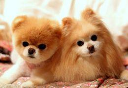 """Pesquisa afirma que """"falar fofinho"""" com cachorro agrada aos animais"""