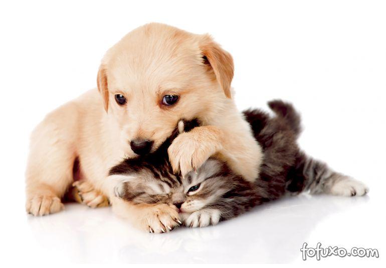 Estudo afirma que gatos podem ser tão inteligentes quanto os cães