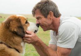 American Humane defende produção do filme 'Quatro Vidas de um Cachorro'