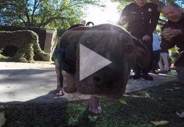 Bombeiro adota cão resgatado e vira celebridade