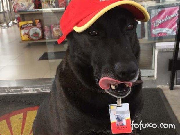 Cachorro é adotado por empresa e ganha até crachá de funcionário
