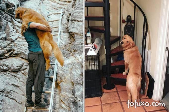 Cachorro medroso precisa de ajuda para subir escadas