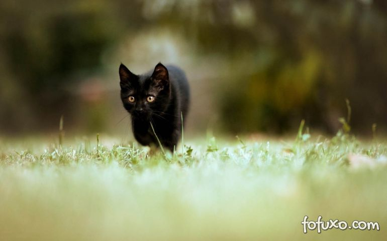 Confira algumas das principais curiosidades do comportamento dos gatos
