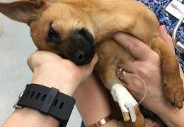 Cachorro é salvo de overdose de heroína