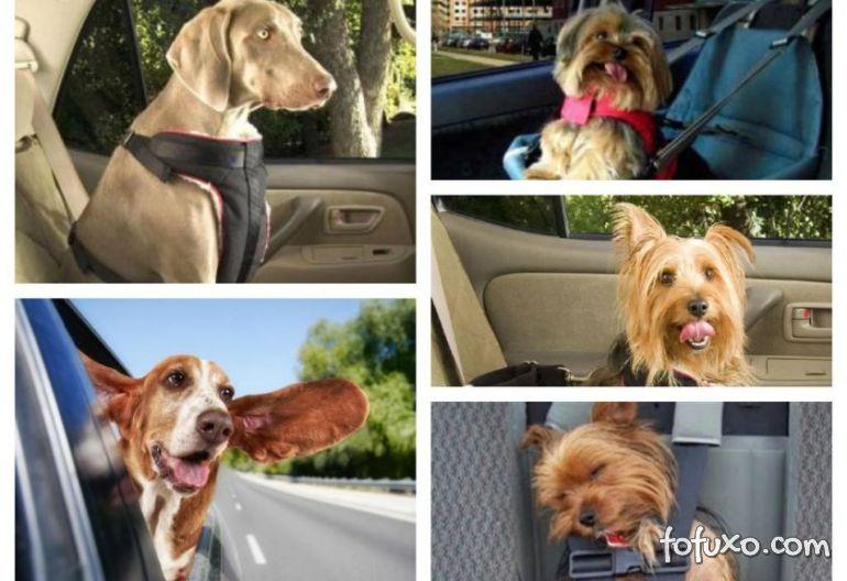 Vídeo impactante mostra o que acontece com os pets durante acidente de carro