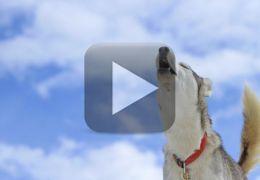 Cachorro toca piano e uiva