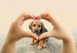 Harvard afirma que cães fazem bem ao coração