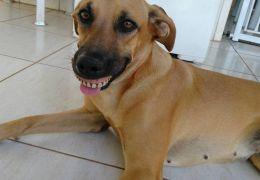 """Conheça a cachorra que ficou famosa pelo seu """"sorriso"""""""