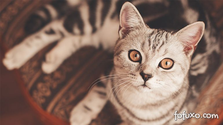 Vídeo mostra gato murmurando na frente da janela