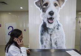Sobrevivente de desastre aéreo afirma que cão a salvou de depressão