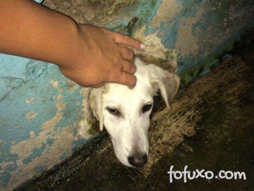 Bombeiros salvam cachorro depois que ele ficou com a cabeça presa na parede