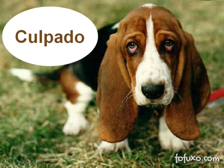 """Entenda o """"olhar de culpado"""" dos cães"""