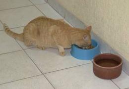 Gato é adotado por igreja e recebe doações dos fiéis
